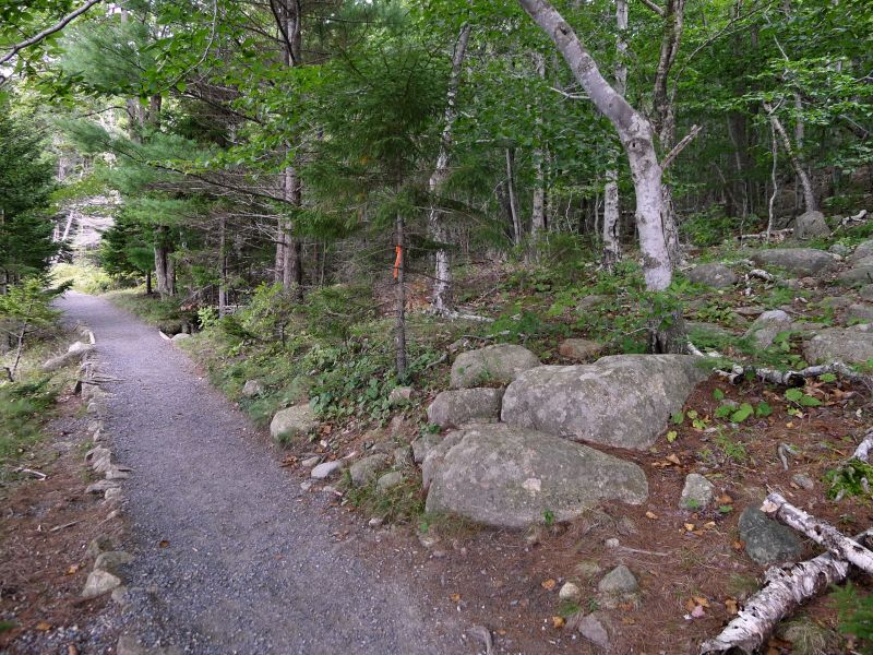 Start of Goat Trail from Jordan Pond Shore Trail. Note the flagging on tree.